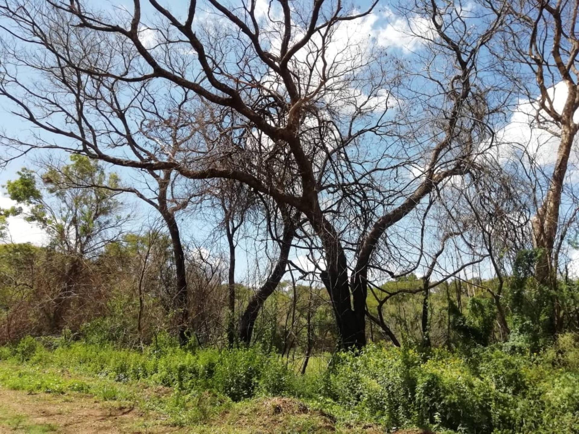 """La imagen fue tomada por Román Murzyla en los últimos días. """"Si bien por las lluvias se fueron recuperando los pastizales bajos, los incendios quemaron árboles de varios años"""", explica Román."""
